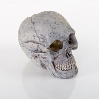 "BioBubble Decorative Human Skull Large 6.25"" x 3.5"" x 5.5"""